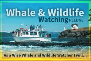 W&Wwatching-Pledge