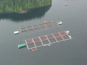 salmon farm-broughton
