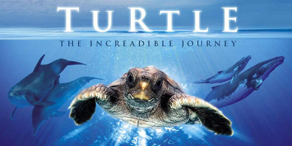 turtle_the-incredible-journey-2009_28991375236591