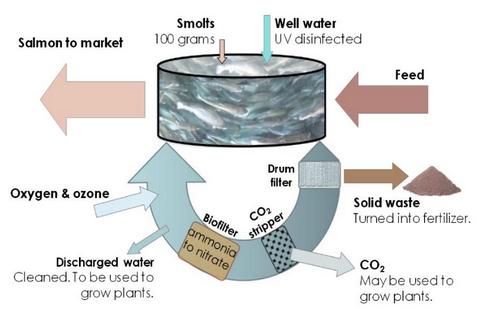 Recirculating Aquaculture System - Living Oceans Society